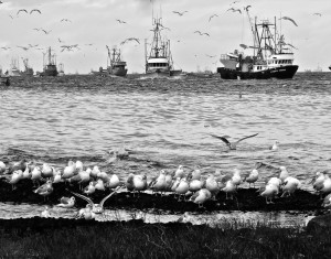 Herring Fishery - Dar Lessard Denman Island 3