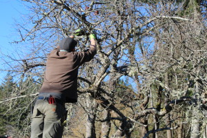 Denman Guesthouse pruning workshop