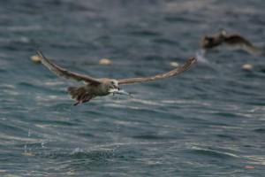 Herring Run Denman Island